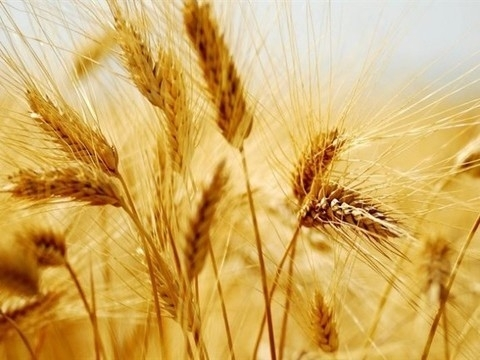 Proceeds from this year's agricultural exports estimated at 6 bln dollars