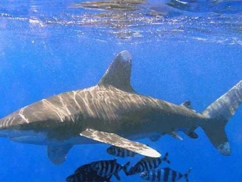 любители тропических на чёрном море есть акулы помнить, что давление