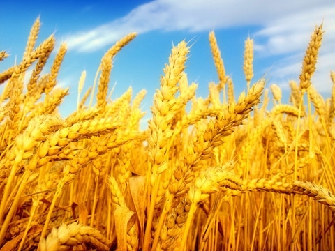 Ukraine's agricultural exports increased by $0.5 bln over 11 months